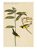 Hooded Warbler Posters by John James Audubon