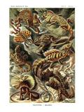 Ödlor Affischer av Ernst Haeckel