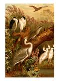 Egrets and Cranes Plakaty autor F.W. Kuhnert