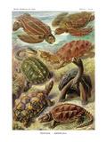 Sköldpaddor Posters av Ernst Haeckel