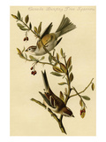 Canada Bunting Tree Sparrow Poster by John James Audubon