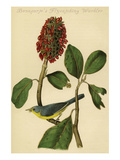 Bonaparte's Flycatching Warbler Prints by John James Audubon