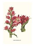 Giant Spear Lily Poster von Louis Van Houtte