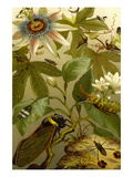 Passion Flower with Insects Posters by F.W. Kuhnert