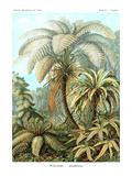 Ormbunkar Affischer av Ernst Haeckel