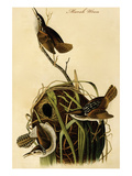 Marsh Wren Prints by John James Audubon