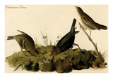 Common Crow Art by John James Audubon