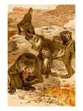 Baboon Family Prints by F.W. Kuhnert