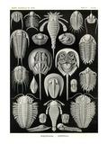 Athropods Bilder av Ernst Haeckel