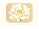 Lotus Flower - Egyptian Bean Kunstdrucke von Louis Van Houtte