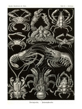Crustaceans Prints by Ernst Haeckel