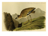 Rocky Mountain Plover Posters by John James Audubon