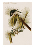 Crested Titmouse Prints by John James Audubon
