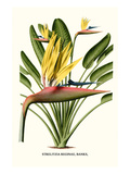 Yellow Bird of Paradise - Mandela's Gold Premium Giclee Print by Louis Van Houtte