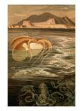 Nautilus Print by F.W. Kuhnert