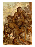 Monkey Family Prints by F.W. Kuhnert