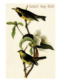 Bachman&#39;s Swmap Warbler Prints by John James Audubon