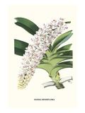 Orchidee (Kleinformat) Poster von Louis Van Houtte