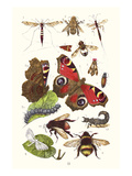 Mason Bee, Sting-Fly, Peacock Butterfly, Humble Bee Prints by James Sowerby