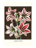 Narzissenlilien Kunstdrucke von Louis Van Houtte