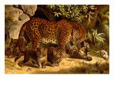 Leopard Prints by F.W. Kuhnert