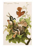 Ferruginous Thrush Posters by John James Audubon