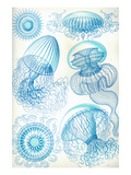 Jelly Fish Planscher av Ernst Haeckel