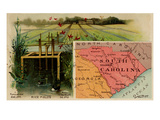 South Carolina Premium Giclee Print by  Arbuckle Brothers