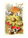 Reindeer Moss, Earth-Star, Scarlet Cup-Moss Plakater af James Sowerby