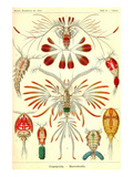 Crustaceans Art by Ernst Haeckel