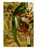 Quetzal Affiches par F.W. Kuhnert