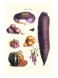 Vegetables; Melon, Potato, Carrot, Purple, Raddish, Art by Philippe-Victoire Leveque de Vilmorin