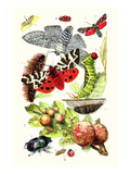 Green Oak Moth, Burnet Moth, Puss Moth, Tiger Moth, Ladybird Beetle Plakater af James Sowerby