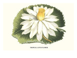 Tropical Lotus Flower Kunstdrucke von Louis Van Houtte