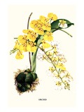 Orchid Premium Giclee Print by Louis Van Houtte