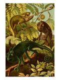 Chameleons Print by F.W. Kuhnert
