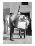 Harding Turkey Delivered to the White House Prints