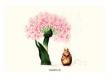 Amaryllis Posters by Louis Van Houtte