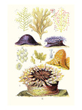 Anemones and Seaweeds Art by James Sowerby