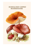 Russula Red-Capped Mushroooms Premium Giclee Print by Edmund Michael