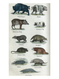 Animals Prints