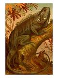 Iguana Kunstdrucke von F.W. Kuhnert