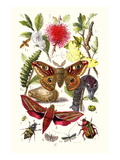 Emperor Moth, Elephant Hawk Moth, Tortoise Beetle Print by James Sowerby