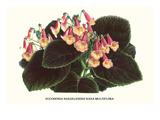 Eucodonia Multiflora Poster by Louis Van Houtte