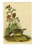 Missouri Meadow Lark Prints by John James Audubon