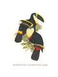 Yellow Ridged Toucan Affiches par John Gould