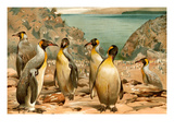 Penguins Prints by F.W. Kuhnert