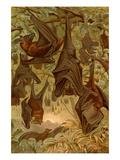 Hanging Bats Giclee-tryk i høj kvalitet af F.W. Kuhnert