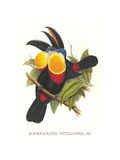 Channel-Billed Toucan Print by John Gould