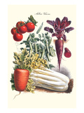 Vegetables; Carrot, Beet, Tomato, and Celery Posters by Philippe-Victoire Leveque de Vilmorin